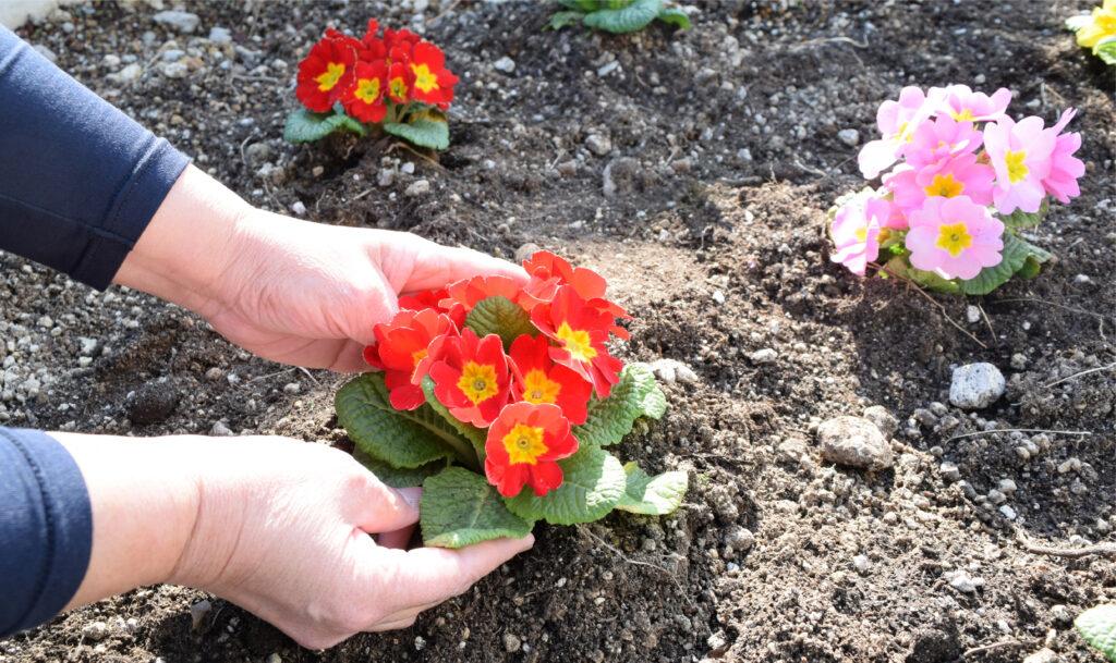 テラスに新しく花を植えました